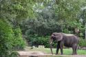 Kilimanjaro Safari in Disney's Animal Kingdom.