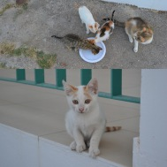 Some of our stray, furry, feline friends!